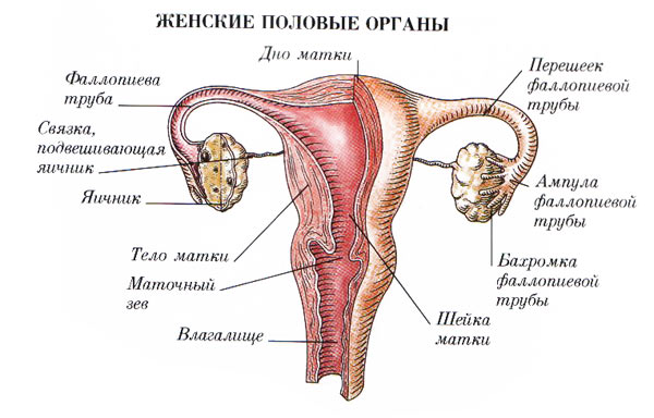 smivat-li-tsiteal-iz-vlagalisha-posle-primeneniya
